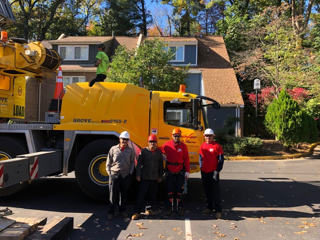 Residential Tree Services in Chantilly Virginia - Certified Arborists - IMG-5884