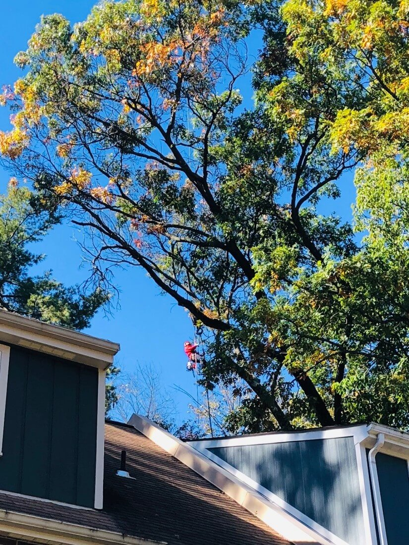 Residential Tree Services in Chantilly Virginia - Certified Arborists - IMG-5886