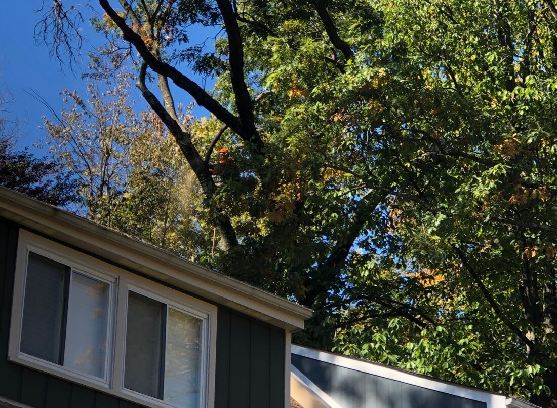 Tree & Shrub Pruning Services in Chantilly Virginia - Certified Arborists - IMG-5888