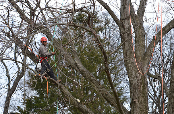 Tree Service Company Chantilly VA - Northern Virginia Tree Experts, INC - home-man-in-tree-family-owned-business