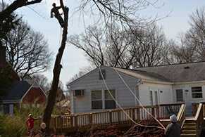 Residential Tree Services in Chantilly Virginia - Certified Arborists - service-residential-services