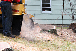 Stump Grinding Services in Chantilly Virginia - service-stump-removal-grinding