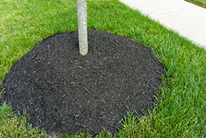 Tree Installation & Planting Services in Chantilly Virginia - service-tree-installation-and-planting-sapling
