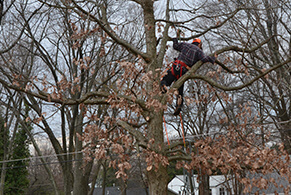 Tree Removal Chantilly Virginia - Certified Local Arborists - service-tree-removal-man-in-tree